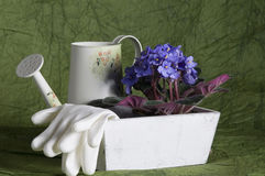 Gardening still-life with violet viola Stock Image
