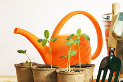 Gardening still life with young plants Royalty Free Stock Photography