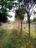 Gardening: a strange braid tree.  Royalty Free Stock Images