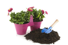 Gardening in summer Royalty Free Stock Photo