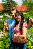 Gardening in summer - couple harvesting carrots Stock Images