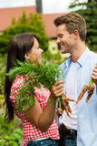 Gardening in summer - couple harvesting carrots Stock Image