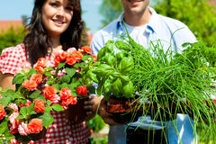 Gardening in summer - couple with herbs Royalty Free Stock Photography