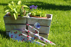 Gardening summer Royalty Free Stock Photography