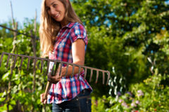 Gardening in summer - woman with gra Stock Photography