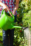 Gardening in summer - woman watering plants Stock Images