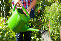 Gardening in summer - woman watering plants. Gardening in summer - woman (only torso) watering plants with water pot Stock Photo