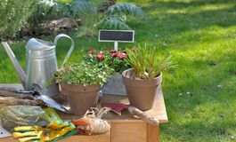 Gardening table. Flower pots tools and garden accessories on a table royalty free stock images