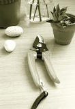 gardening table tools wood Obrazy Royalty Free