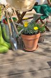 Gardening in terrace Stock Image