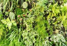 Gardening theme, natural scene, greenery Royalty Free Stock Image