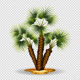 Gardening theme wtih palm tree. Illustration Stock Images