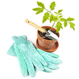 Gardening Time Stock Photography