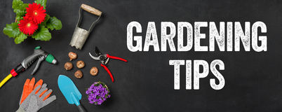 Gardening tips. Garden tools on a dark background - Gardening tips stock images