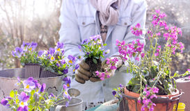 Gardening  to springtime Stock Images