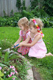 Gardening Together. Two little girls work together to plant some flowers in their garden Stock Photography