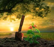 Gardening tool and flowers planting on dirt against beautiful  s Stock Images