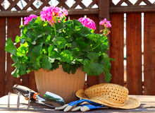 Gardening tools. Pot of geraniums flowers with gardening tools Stock Image