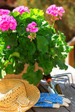 Gardening tools. Pot of geraniums flowers with gardening tools royalty free stock photography