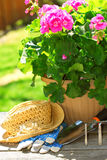 Gardening tools. Pot of geraniums flowers with gardening tools Royalty Free Stock Photos