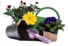 Gardening Tools 3. A watering bucket with a rose and all the gardening tools to plant it Stock Photo