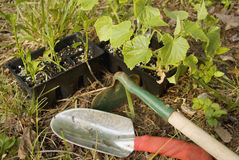 Gardening Tools Royalty Free Stock Photo