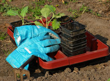 Gardening tools. The image shows some gardening tools and gloves royalty free stock image