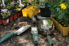 Gardening tools. And spring plants ready for planting Royalty Free Stock Photos