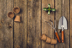 Gardening tools and accessories on wooden background. Top view Royalty Free Stock Image
