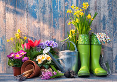 Free Gardening Tools And Flowers On The Terrace Royalty Free Stock Images - 67556709