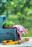 Gardening tools in a blue wooden tool box Royalty Free Stock Image