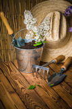Gardening tools and a branch of a blossoming white lilac Royalty Free Stock Images