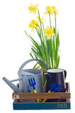 Gardening tools with daffodils Stock Photos