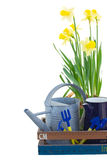 Gardening tools with daffodils Stock Photo