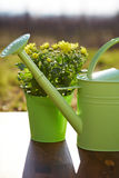 Gardening tools and flower Stock Images