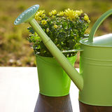 Gardening tools and flower Royalty Free Stock Image