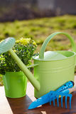 Gardening tools and flower Stock Photo
