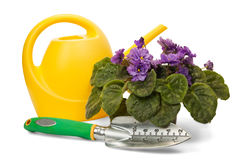 Gardening Tools. Flower pot with garden tools on a white background Stock Photos