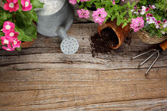 Gardening tools. And flower on wooden background Stock Photos