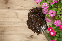 Gardening tools and flower. On wooden background Royalty Free Stock Photography