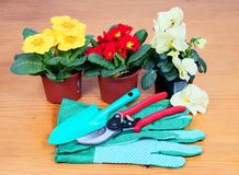 Gardening tools with flowers Royalty Free Stock Images