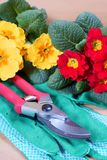 Gardening tools with flowers stock photography