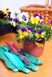 Gardening tools with flowers Royalty Free Stock Photo