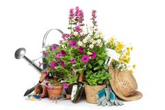 Gardening tools and flowers. Isolated on white Royalty Free Stock Images
