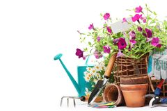 Gardening tools and flowers. Isolated on white Royalty Free Stock Photography