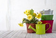 Gardening. Tools and flowers against the background of the wall Royalty Free Stock Photography