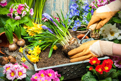 Gardening. Tools and flowers in the garden Royalty Free Stock Photography