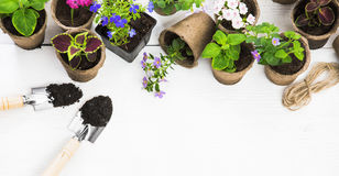 Gardening tools and flowers royalty free stock image
