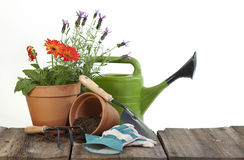 Gardening Tools and Flowers. Gardening tools including spade with lady bug crawling up handle, fork and gloves, terra-cotta pots, one filled with Gerbera Daisy Royalty Free Stock Images