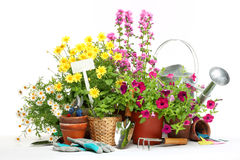 Gardening tools and flowers. Isolated on white Royalty Free Stock Photo
